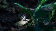 Das Papiliorama in Zentralamerika